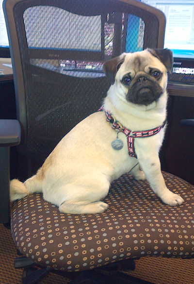 Brody the Office Mascot